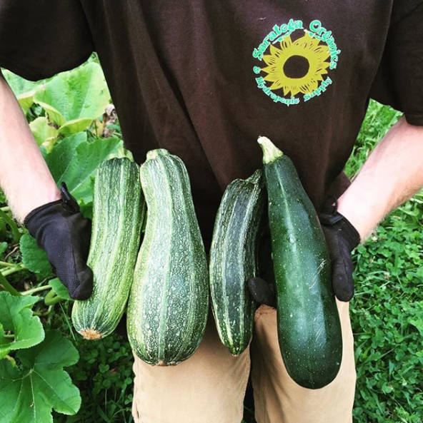 Organically grown zucchini